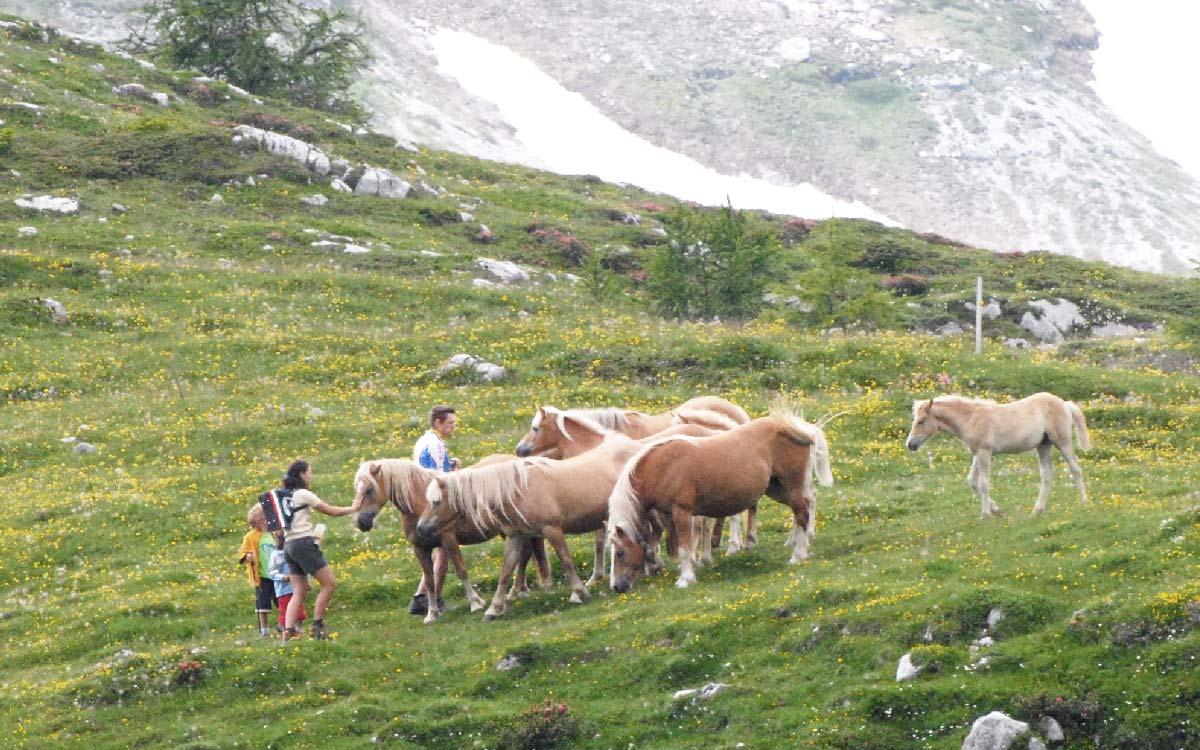 Val di Non - escursioni - cavalli liberi