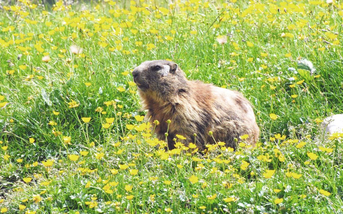 Val di Non - passeggiate nella natura - marmotte
